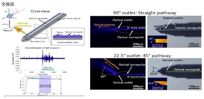 Optical Waveguide - integrated Si Brain Probe : Neuronode800